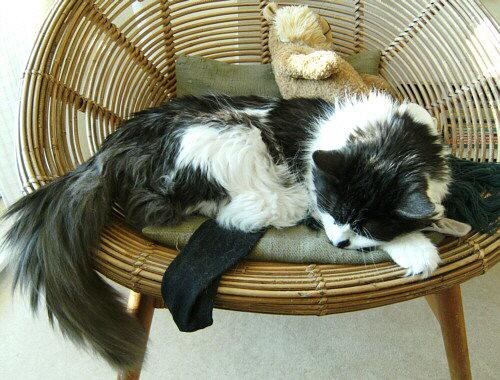 schlafender Kater auf dem Sessel