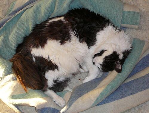 schlafender Kater auf dem Tepich